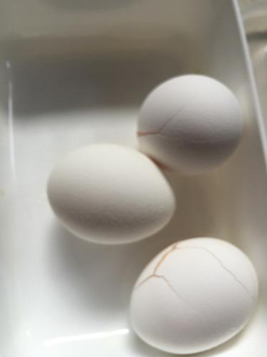 (1:密閉容器や袋に入れて卵を冷凍)