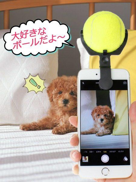 犬の撮影用グッズ「こっち向いてワン」登場