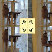猫がセミ化?話題の「猫セミ」になるまでの写真がコントみたいで…
