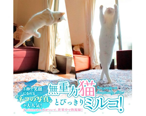 写真集『無重力猫とびっきりミルコ!』