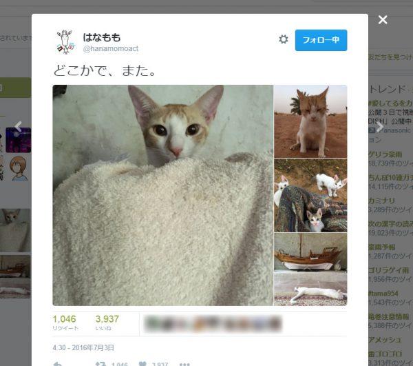猫の癒やし動画にTwitterから「不適切」通告