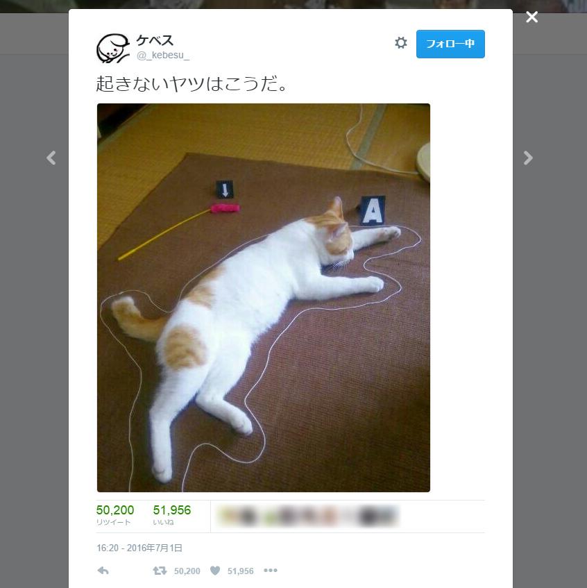 凶悪事件か?事件現場に横たわる猫 凶器は……5万RTされた現場写真