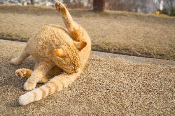 ナニ!毛繕いする猫