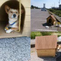 真夏の炎天下、駐車場に捨てられた通称「家付き捨て犬」のその後