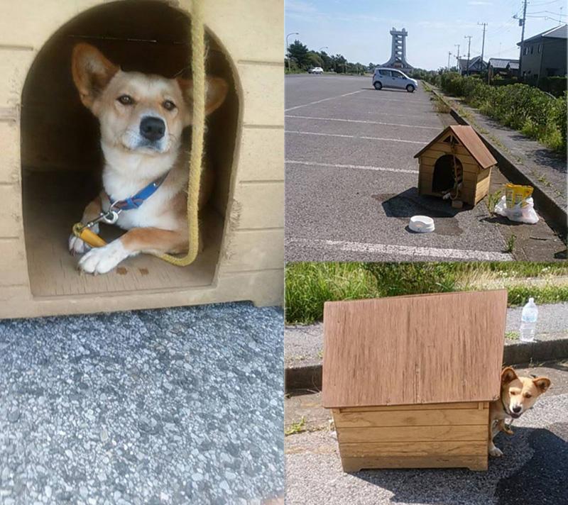 「家付き捨て犬」から「別荘付きお嬢様犬」へ 拡散された捨て犬のさらにその後
