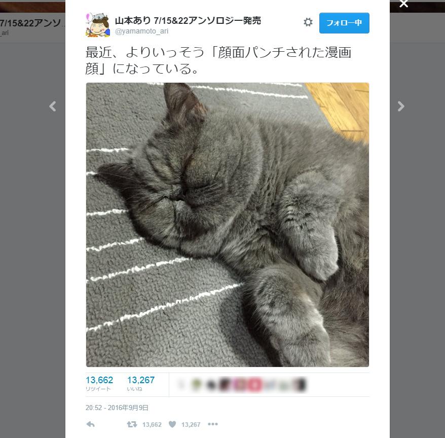 「顔面パンチされた漫画顔」の猫さんが愛嬌たっぷりで癒やされる