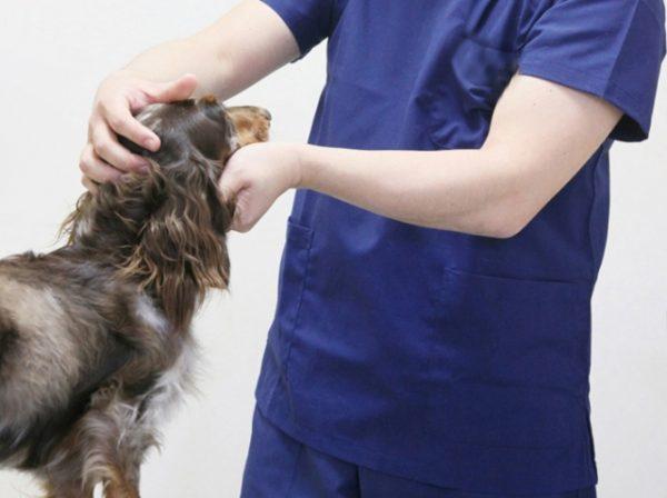 診察を受ける犬(イメージ)