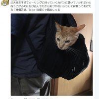 父LOVEな猫が決死の大作戦! 「準備万端」と言わんばかり…