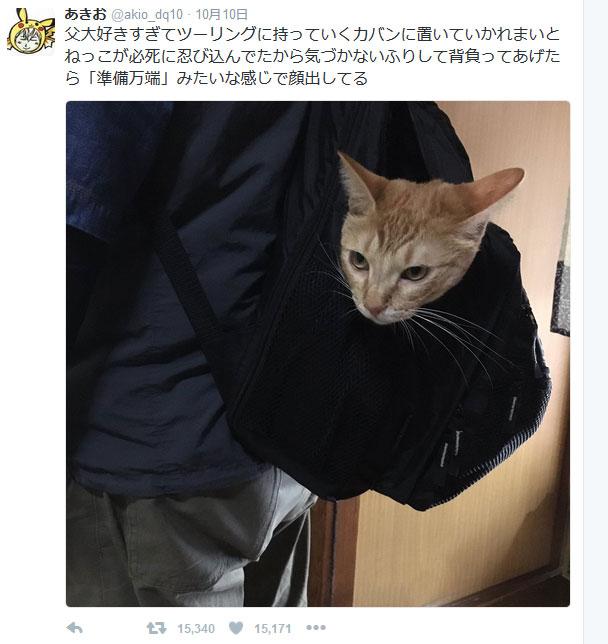 父LOVEな猫が決死の大作戦! 「準備万端」と言わんばかりの表情に皆ほのぼの