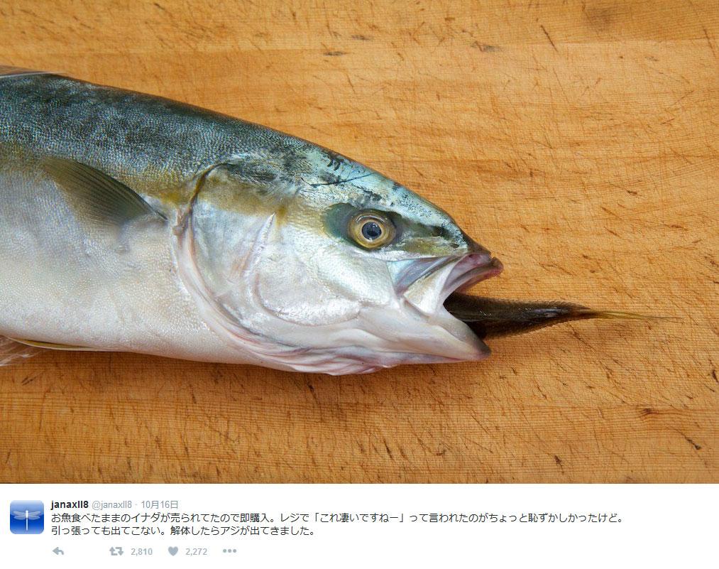 どうしてこうなった……買ったイナダの口から魚のしっぽ?
