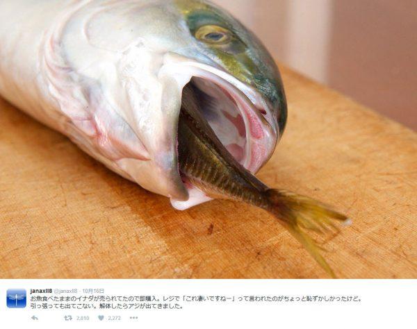 魚の口から魚のしっぽ