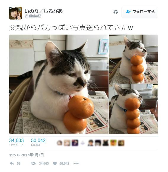 「意地でもどかないニャン!」手にみかんを乗せられた猫が面白くも可愛らしい
