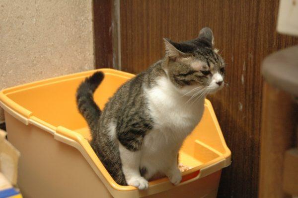 猫の謎行動「トイレハイ」パターン した後に「だだだだー」が最も多く58%