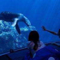 水族館の水槽前でお泊まり体験 大阪・海遊館「女性…