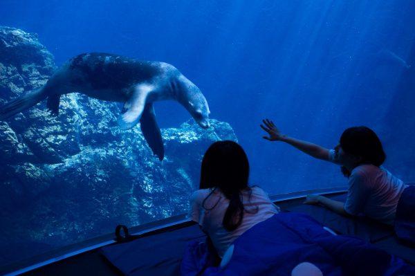 水族館の水槽前でお泊まり体験 大阪・海遊館「女性限定おとまりスクール」開催
