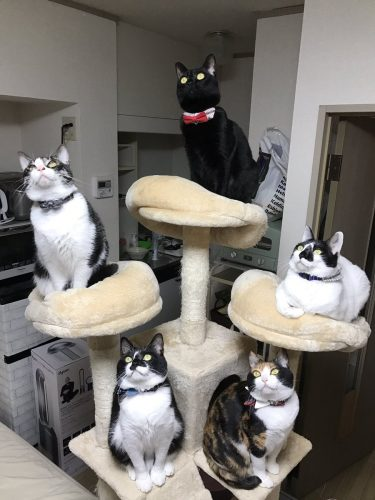 ゴキブリと対峙する「五猫神」が威圧感たっぷり