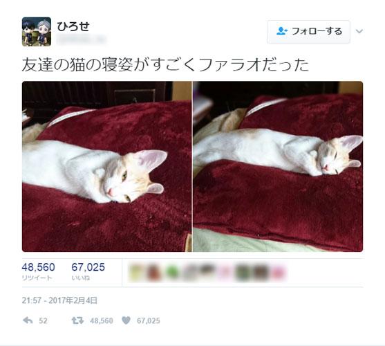 すごいファラオ…!優雅な猫ちゃんのショットが話題
