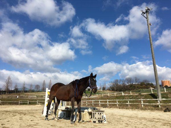 痛タオル歓迎の乗馬クラブ 余生馬達のための支援募集