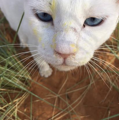 可愛いけどトホホ…花粉を運ぶ「猫の運び屋」が話題