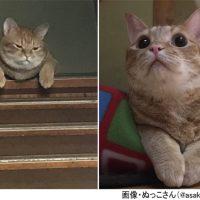 感情が一目瞭然すぎる猫 ご飯あげ忘れた時の「ふてくされ顔」…