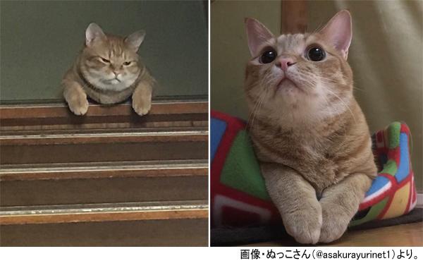 感情が一目瞭然すぎる猫 ご飯あげ忘れた時の「ふてくされ顔」と、貰ったあとの「キラッ顔」