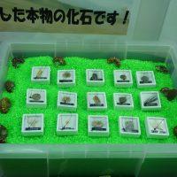 クレーンゲームで化石が発掘出来る!化石キャッチャー復活