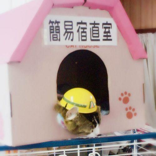 芦ノ牧温泉駅・ねこ施設長の「安全ヘルメット」が話題