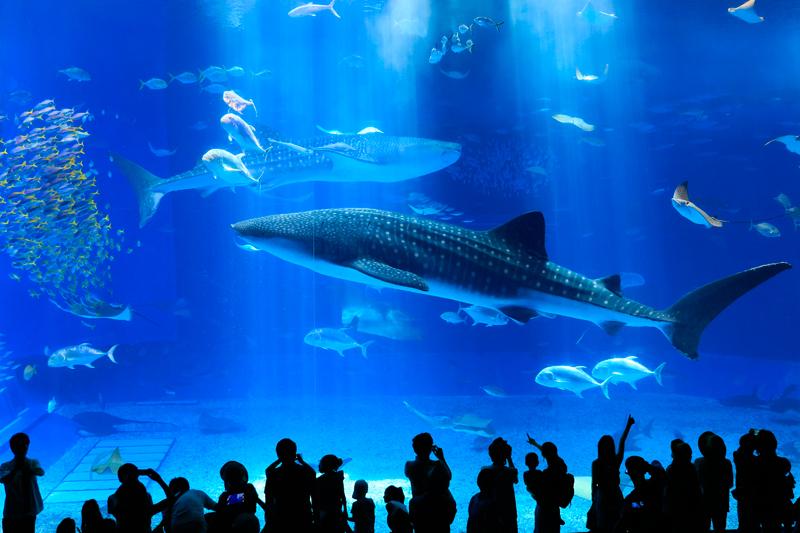 物議を醸した水族館でのフラッシュ問題 結局フラッシュは意味あるの?