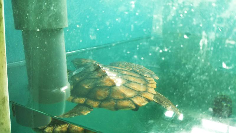 「困ったときのカメ頼み」 自由研究にお困りの名古屋キッズには「名古屋港カメ類繁殖研究施設」がおすすめ