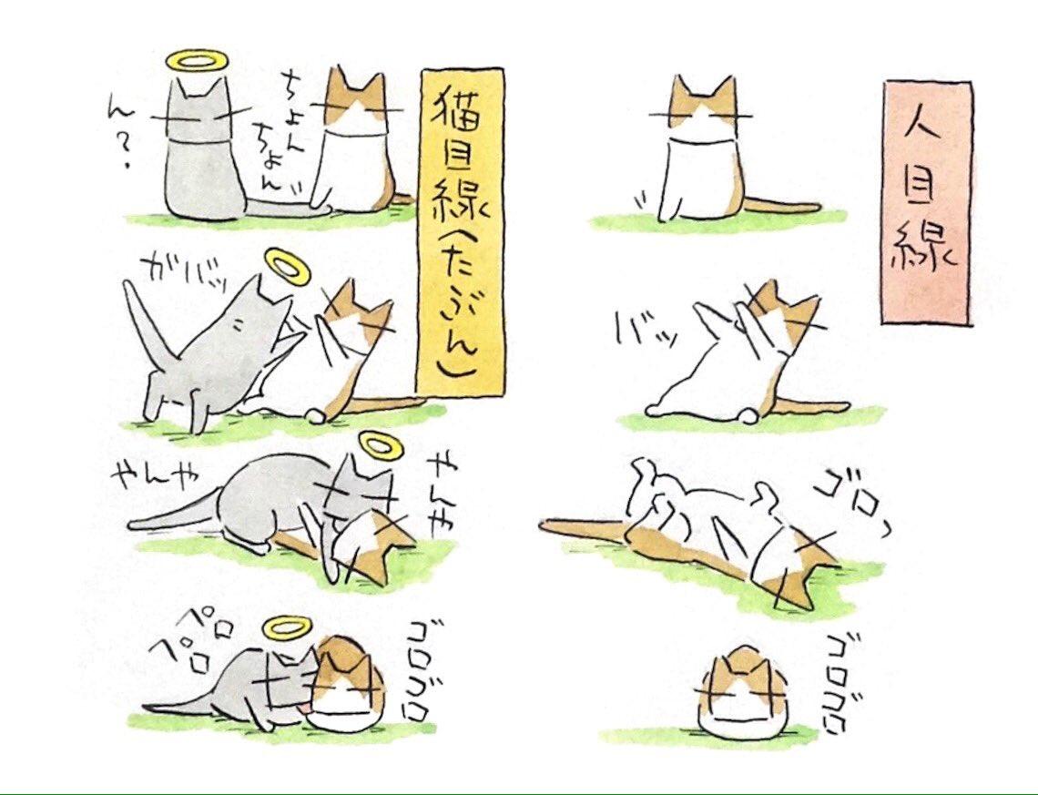 あの世とこの世が交わるとき……猫の世界でもこんな事が?