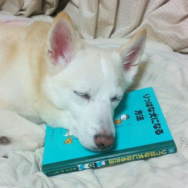 睡眠学習に余念がないワンコさん!りっぱな犬に育ってます