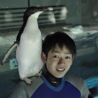 恋するペンギン?名古屋港水族館のアデリーペンギン 飼育員に…