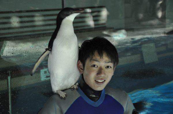 恋するペンギン?名古屋港水族館のアデリーペンギン 飼育員に構ってほしくて「肩のり」の技習得