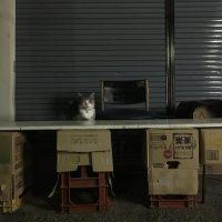 異世界に迷い込んだ?深夜密かにオープンする猫の露天商