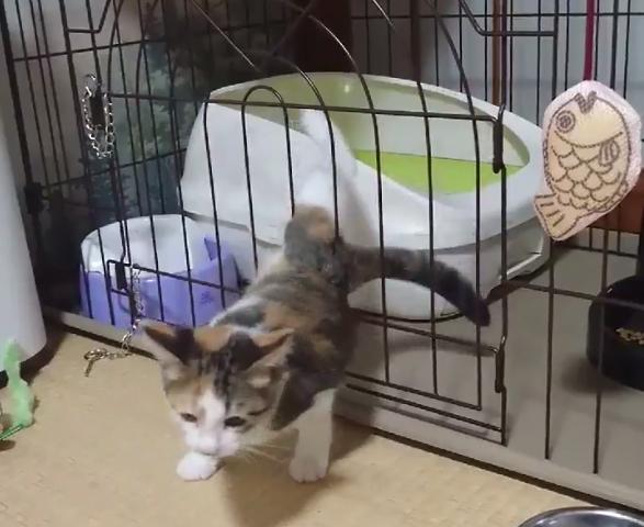 【衝撃映像!】ケージをすり抜けてしまう子猫の脱出劇に驚愕!!