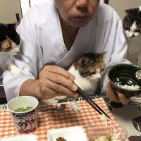 三位一体 猫フォーメーション!!那須の長楽寺にいる猫ちゃん…