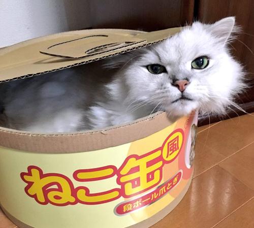 巨大な缶詰に入っていたのは……。ネコ缶に入っているネコさん!