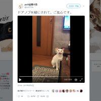飼い主にキレまくる白ネコさんが話題 「これじゃドアが開けられ…