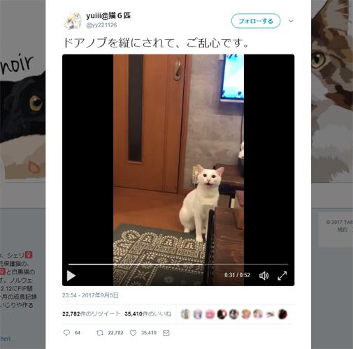 飼い主にキレまくる白ネコさんが話題 「これじゃドアが開けられないんだニャー!!(怒)」