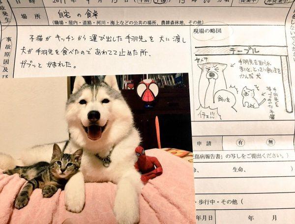 犬を守ろうとしてまさかの大けが!保険屋さんに提出した書類が話題