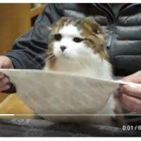食事のマナーがとってもよい猫ちゃんが話題。お行儀…