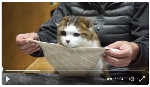 食事のマナーがとってもよい猫ちゃんが話題。お行儀良くてかわいい!