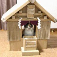 ダンボール神社の御神体は保護猫たちの良縁を結ぶ猫神様?
