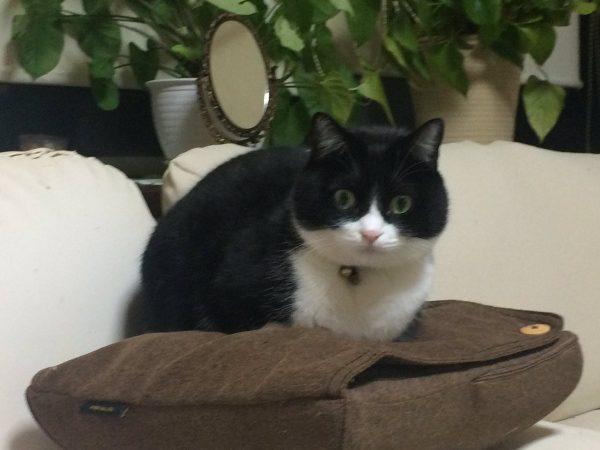 マッサージ器vsにゃんこ! 中身の動きにびっくりな猫ちゃんが話題