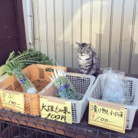 農家の無人販売が有猫販売に。猫店員さんのオススメ野菜はコチ…