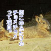 野原ひろしの藤原啓治とラムちゃんの平野文が方言しゃべる動物…