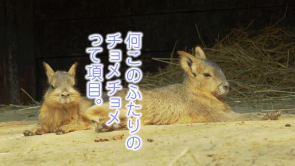 野原ひろしの藤原啓治とラムちゃんの平野文が方言しゃべる動物夫婦に