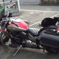 バイクの上の老猫。バイカーが平和的解決へと導いたその作戦と…