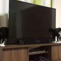 やはり猫は液体か?胴がやたら長い猫が目撃されてネ…