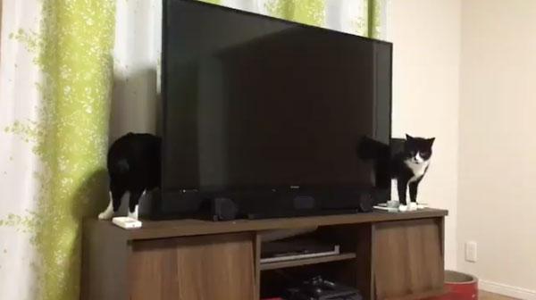 やはり猫は液体か?胴がやたら長い猫が目撃されてネット民騒然